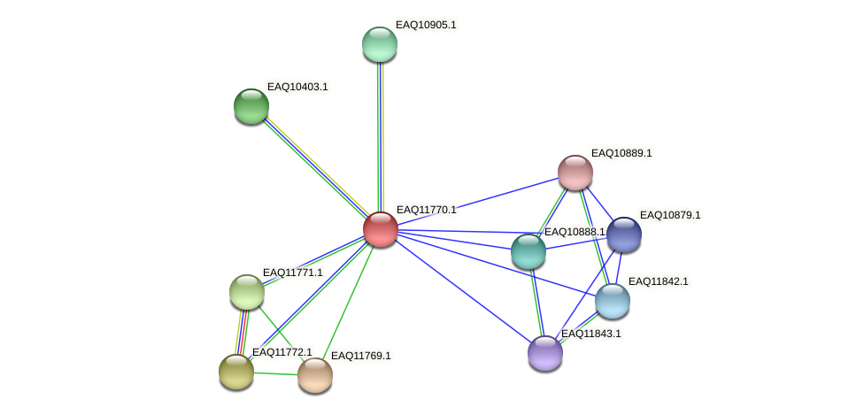 RB2654_00250 protein (Maritimibacter alkaliphilus) - STRING interaction network