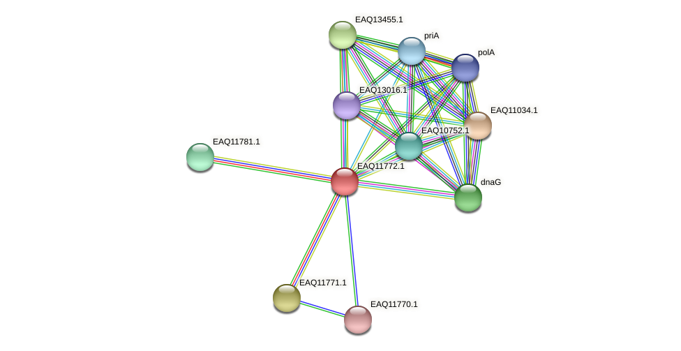 RB2654_00260 protein (Maritimibacter alkaliphilus) - STRING interaction network