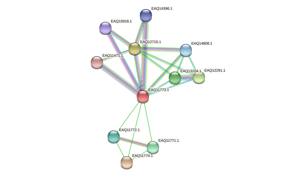 RB2654_00265 protein (Maritimibacter alkaliphilus) - STRING interaction network