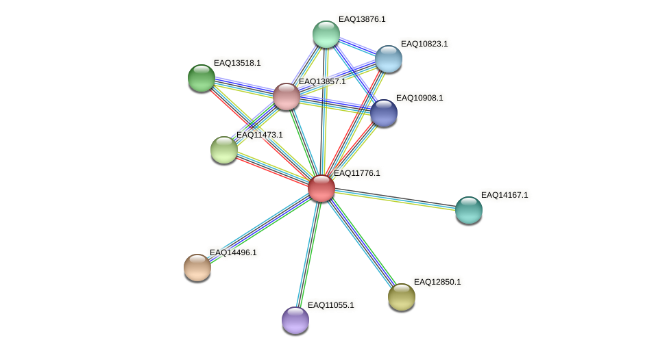 RB2654_00280 protein (Maritimibacter alkaliphilus) - STRING interaction network