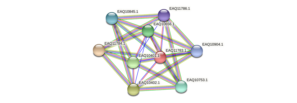 RB2654_00315 protein (Maritimibacter alkaliphilus) - STRING interaction network