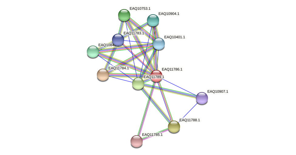 RB2654_00330 protein (Maritimibacter alkaliphilus) - STRING interaction network