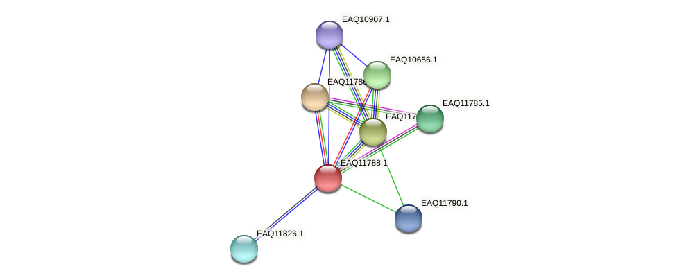 RB2654_00340 protein (Maritimibacter alkaliphilus) - STRING interaction network