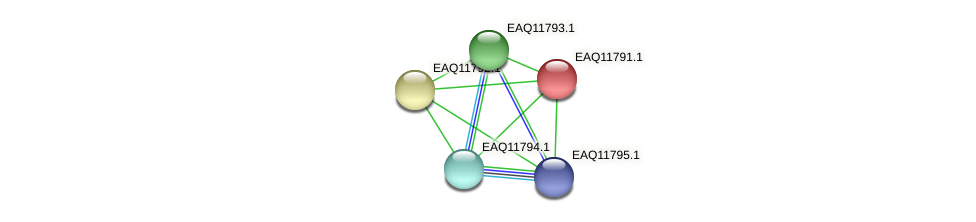 RB2654_00355 protein (Maritimibacter alkaliphilus) - STRING interaction network
