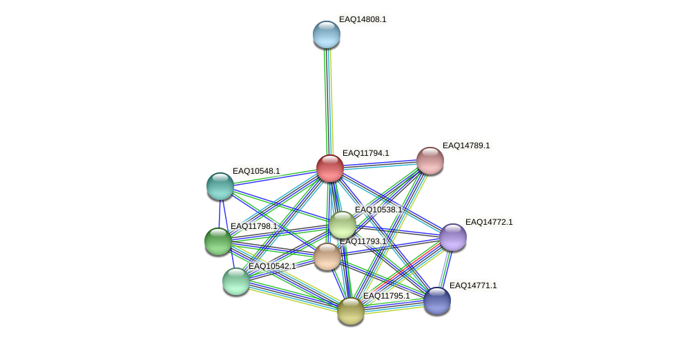 RB2654_00370 protein (Maritimibacter alkaliphilus) - STRING interaction network