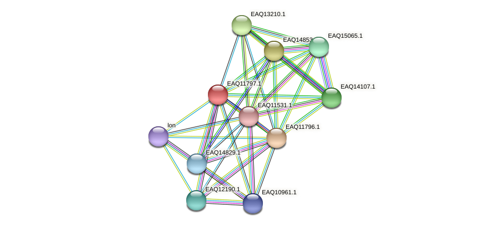 RB2654_00385 protein (Maritimibacter alkaliphilus) - STRING interaction network