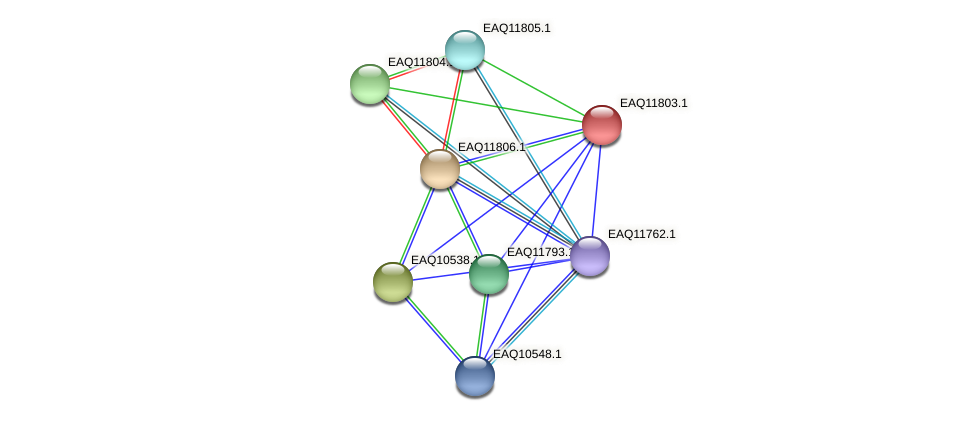 RB2654_00415 protein (Maritimibacter alkaliphilus) - STRING interaction network