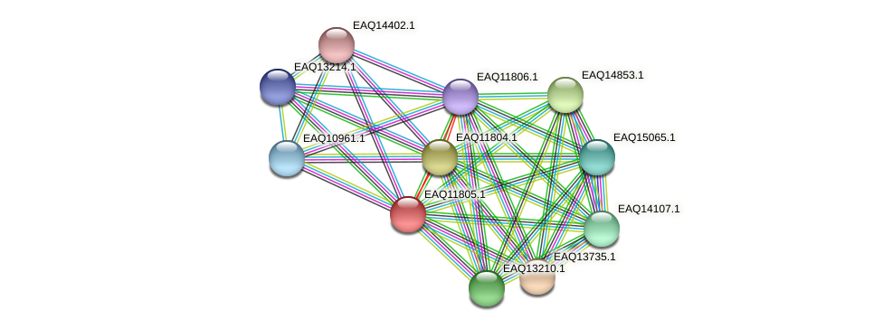 RB2654_00425 protein (Maritimibacter alkaliphilus) - STRING interaction network