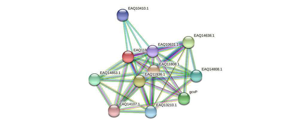 RB2654_00445 protein (Maritimibacter alkaliphilus) - STRING interaction network