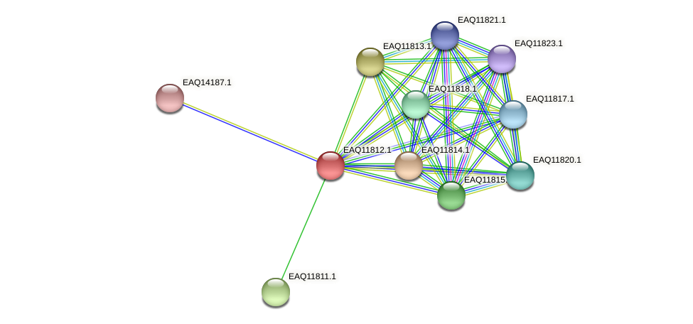 RB2654_00460 protein (Maritimibacter alkaliphilus) - STRING interaction network