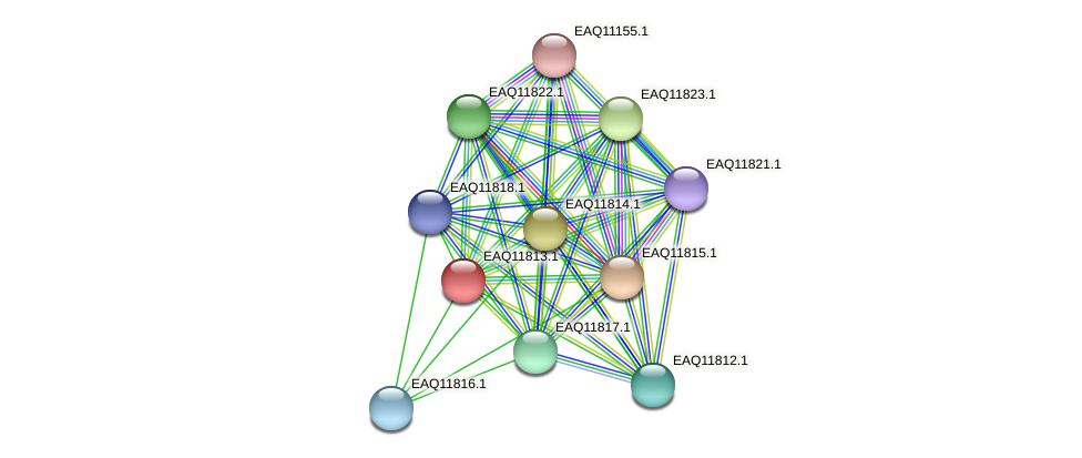 RB2654_00465 protein (Maritimibacter alkaliphilus) - STRING interaction network