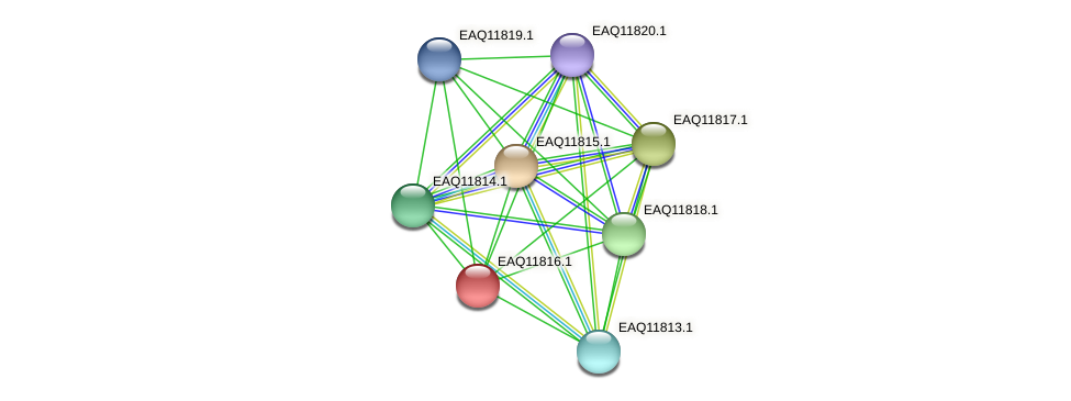 RB2654_00480 protein (Maritimibacter alkaliphilus) - STRING interaction network