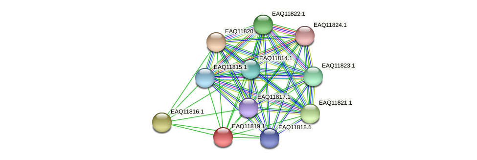 RB2654_00495 protein (Maritimibacter alkaliphilus) - STRING interaction network