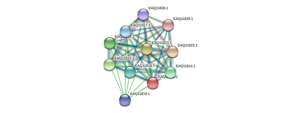 RB2654_00500 protein (Maritimibacter alkaliphilus) - STRING interaction network