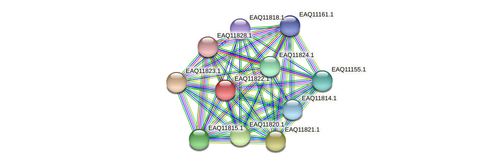 RB2654_00510 protein (Maritimibacter alkaliphilus) - STRING interaction network