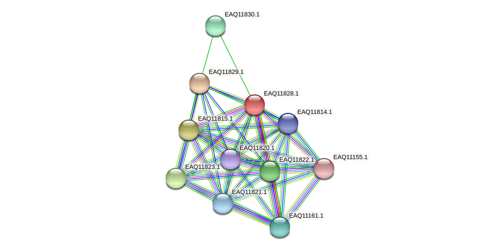 RB2654_00540 protein (Maritimibacter alkaliphilus) - STRING interaction network