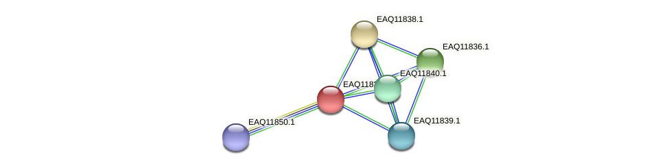 RB2654_00585 protein (Maritimibacter alkaliphilus) - STRING interaction network