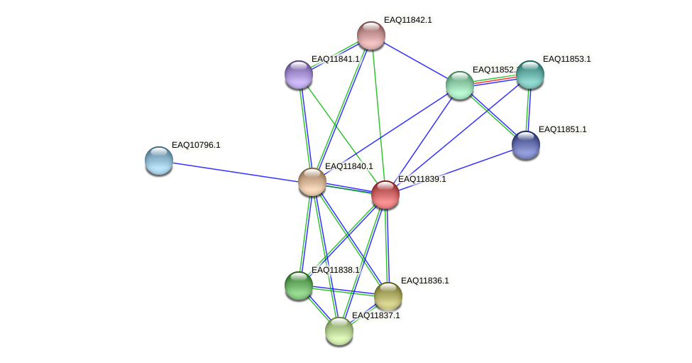RB2654_00595 protein (Maritimibacter alkaliphilus) - STRING interaction network