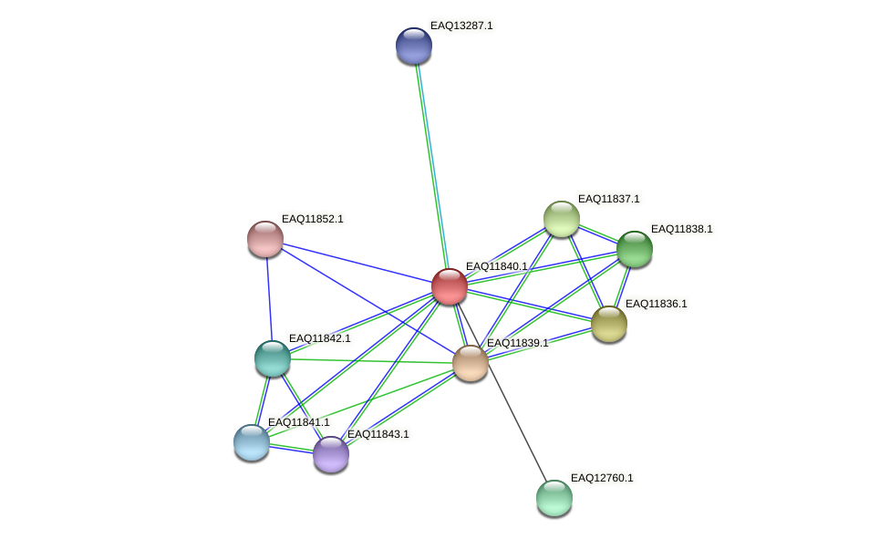 RB2654_00600 protein (Maritimibacter alkaliphilus) - STRING interaction network