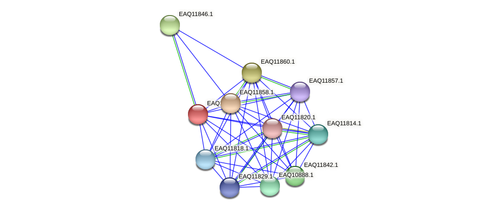 RB2654_00620 protein (Maritimibacter alkaliphilus) - STRING interaction network