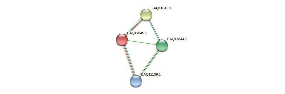 RB2654_00625 protein (Maritimibacter alkaliphilus) - STRING interaction network