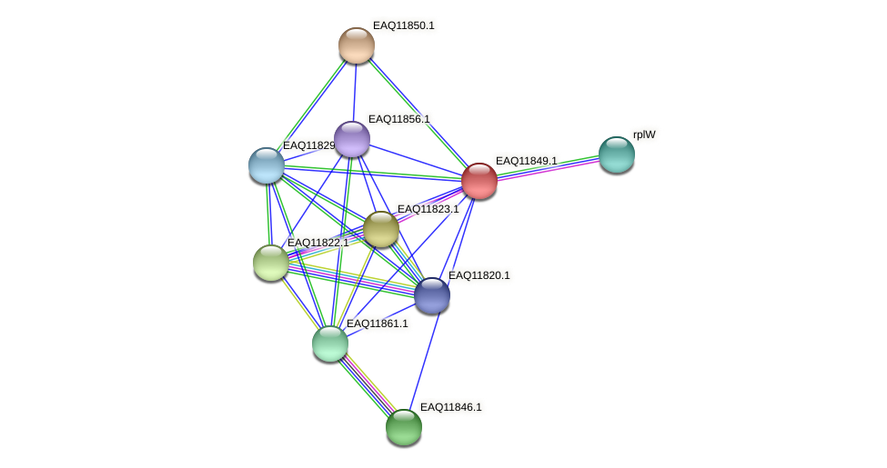 RB2654_00645 protein (Maritimibacter alkaliphilus) - STRING interaction network