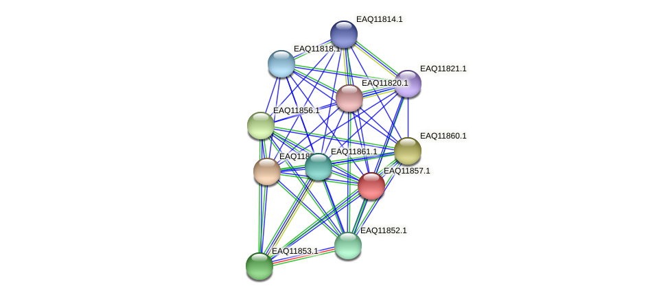 RB2654_00685 protein (Maritimibacter alkaliphilus) - STRING interaction network