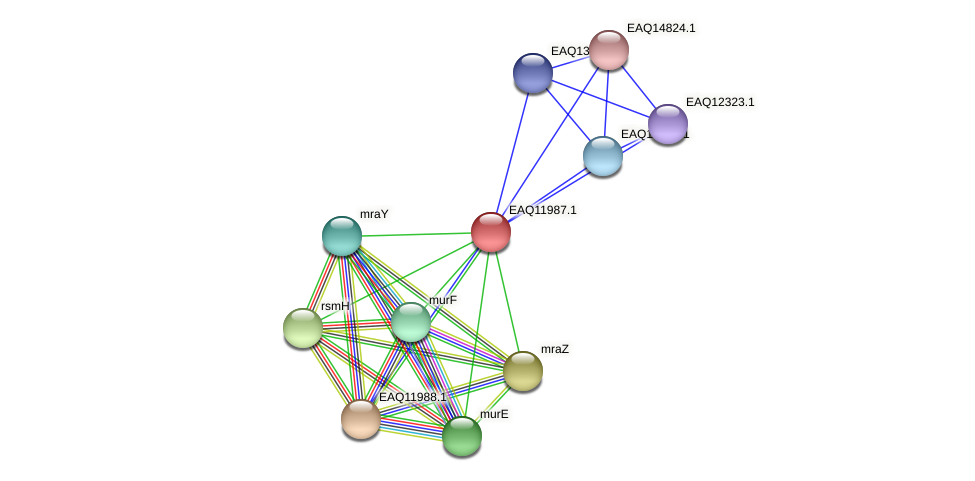 RB2654_00755 protein (Maritimibacter alkaliphilus) - STRING interaction network