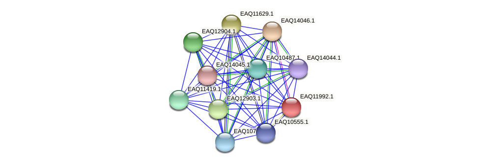 RB2654_00780 protein (Maritimibacter alkaliphilus) - STRING interaction network