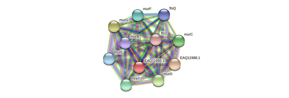 RB2654_00795 protein (Maritimibacter alkaliphilus) - STRING interaction network