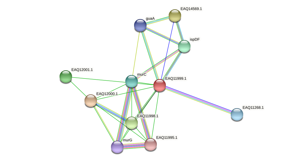 RB2654_00815 protein (Maritimibacter alkaliphilus) - STRING interaction network