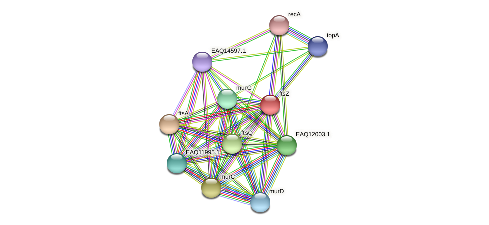 ftsZ protein (Maritimibacter alkaliphilus) - STRING interaction network