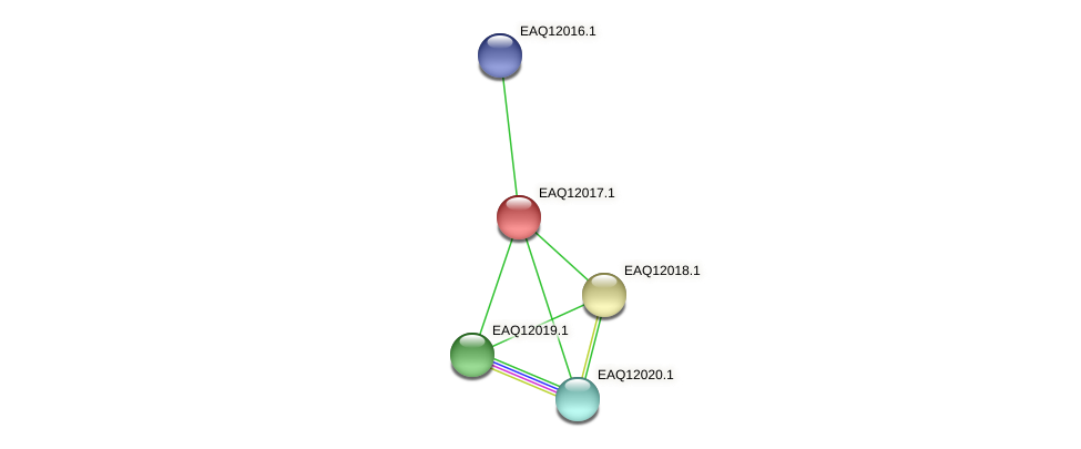 RB2654_00905 protein (Maritimibacter alkaliphilus) - STRING interaction network