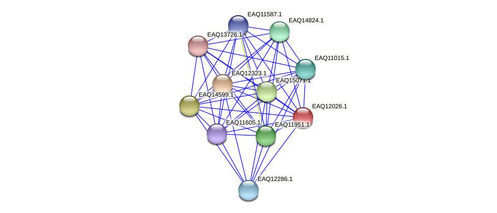 RB2654_00950 protein (Maritimibacter alkaliphilus) - STRING interaction network