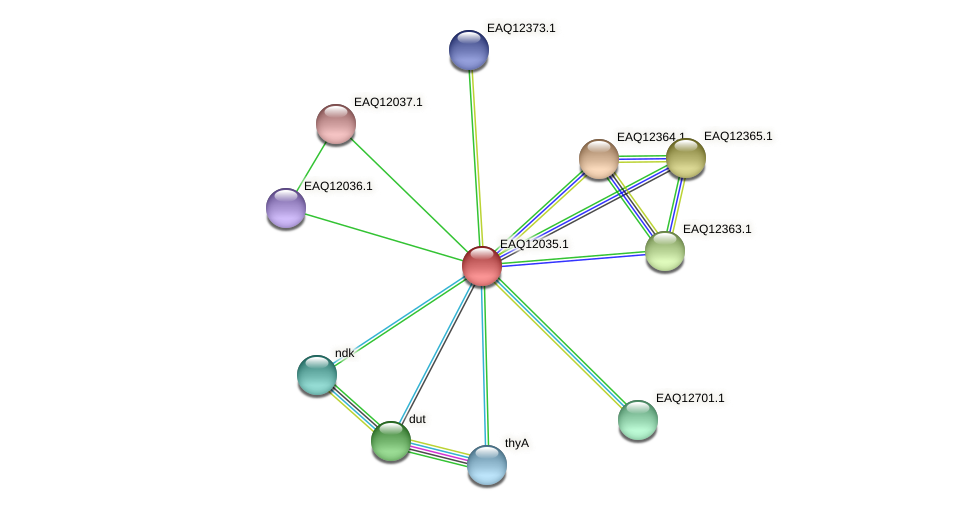 RB2654_00995 protein (Maritimibacter alkaliphilus) - STRING interaction network