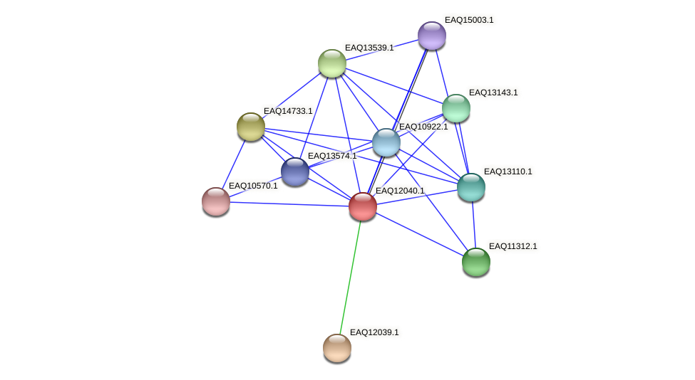 RB2654_01020 protein (Maritimibacter alkaliphilus) - STRING interaction network