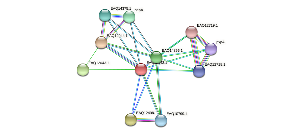 RB2654_01030 protein (Maritimibacter alkaliphilus) - STRING interaction network