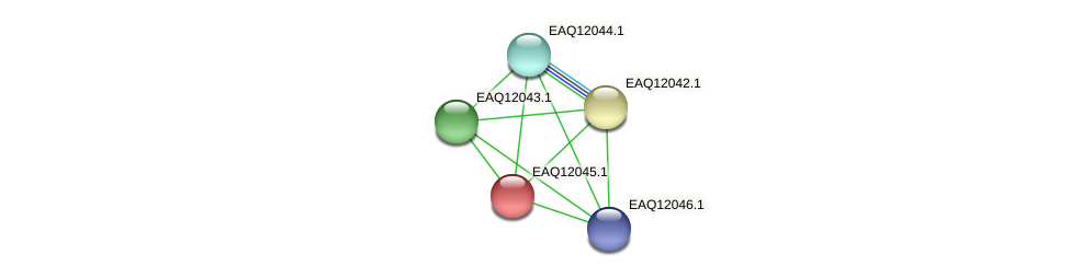 RB2654_01045 protein (Maritimibacter alkaliphilus) - STRING interaction network