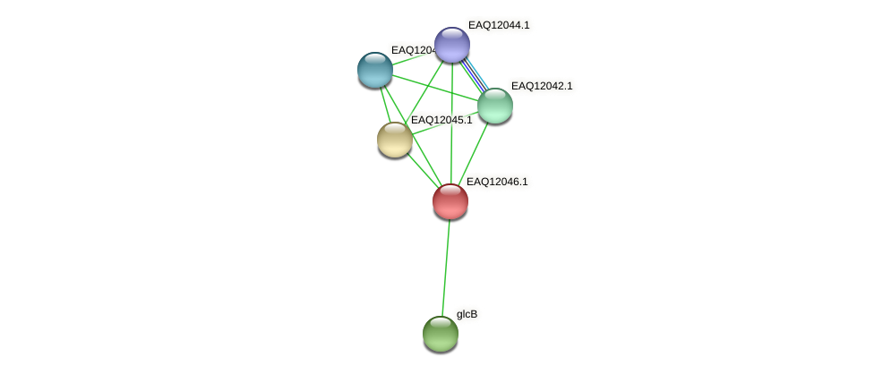RB2654_01050 protein (Maritimibacter alkaliphilus) - STRING interaction network