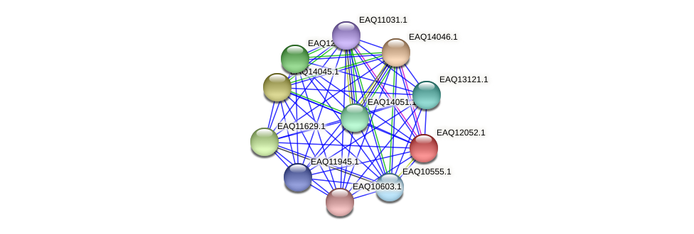 RB2654_01080 protein (Maritimibacter alkaliphilus) - STRING interaction network