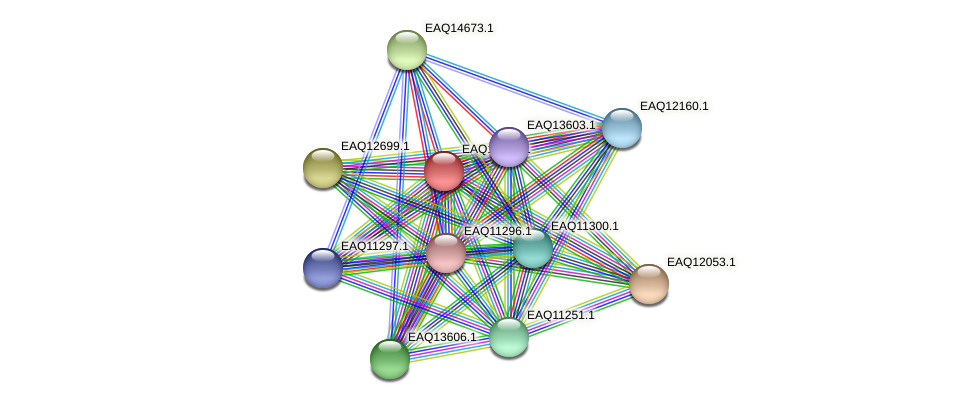 RB2654_01090 protein (Maritimibacter alkaliphilus) - STRING interaction network