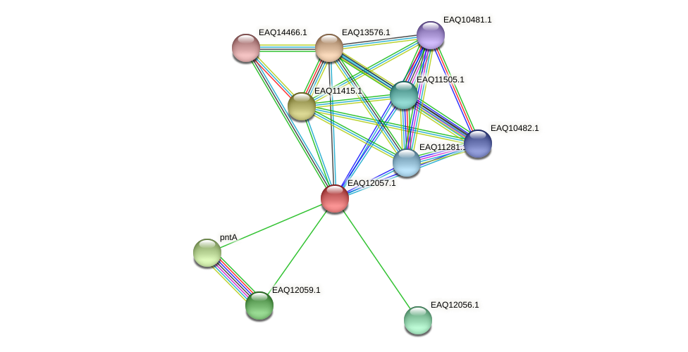 RB2654_01105 protein (Maritimibacter alkaliphilus) - STRING interaction network