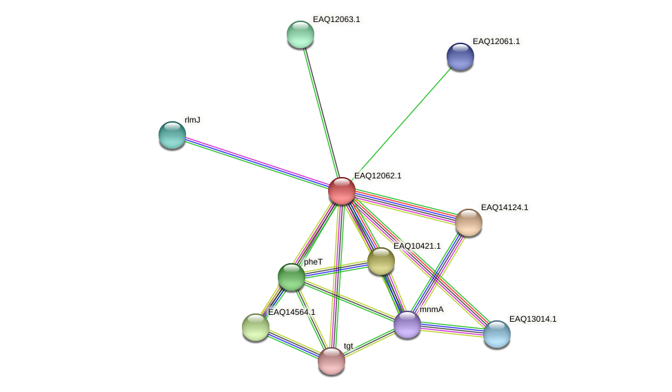 RB2654_01130 protein (Maritimibacter alkaliphilus) - STRING interaction network