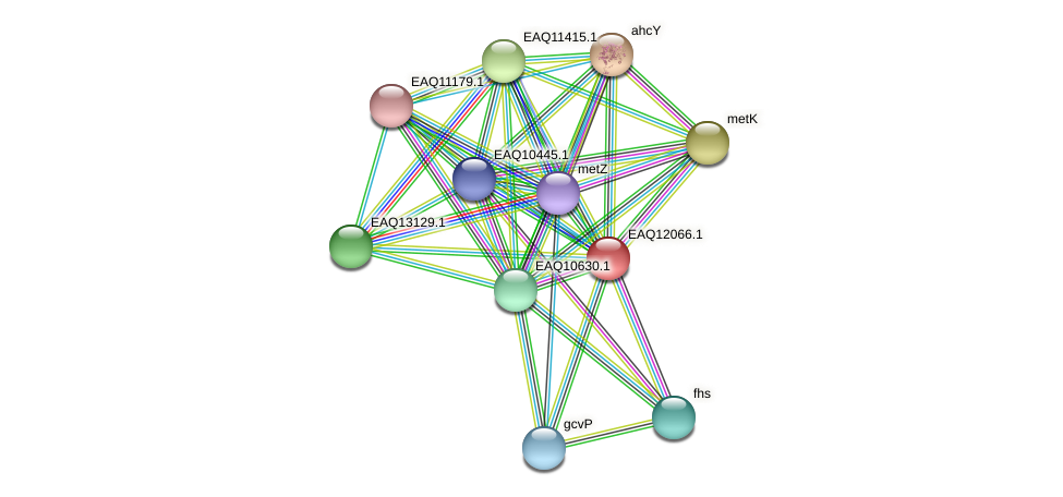 RB2654_01150 protein (Maritimibacter alkaliphilus) - STRING interaction network