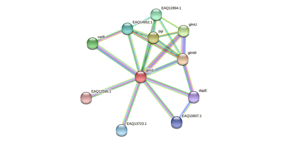 glmS protein (Maritimibacter alkaliphilus) - STRING interaction network