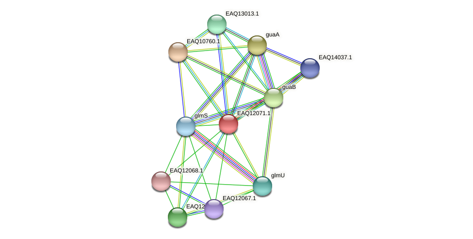 RB2654_01175 protein (Maritimibacter alkaliphilus) - STRING interaction network