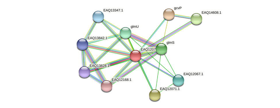 RB2654_01180 protein (Maritimibacter alkaliphilus) - STRING interaction network