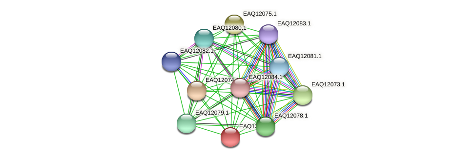 RB2654_01200 protein (Maritimibacter alkaliphilus) - STRING interaction network