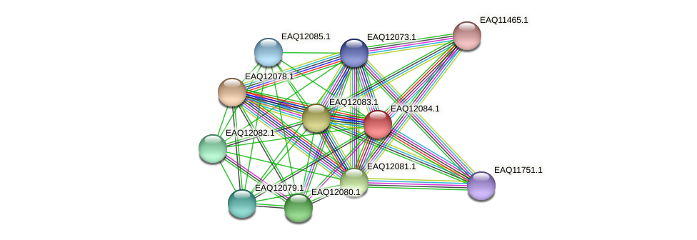 RB2654_01240 protein (Maritimibacter alkaliphilus) - STRING interaction network