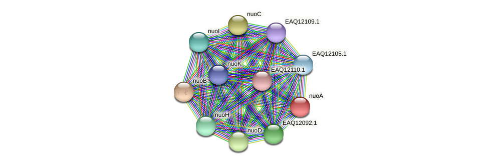 nuoA protein (Maritimibacter alkaliphilus) - STRING interaction network